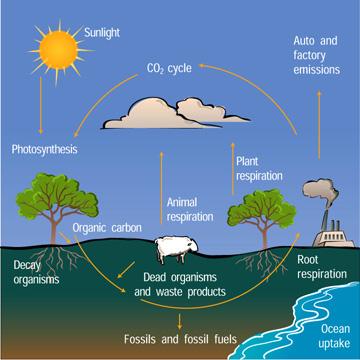 Uhlíkový cyklus.